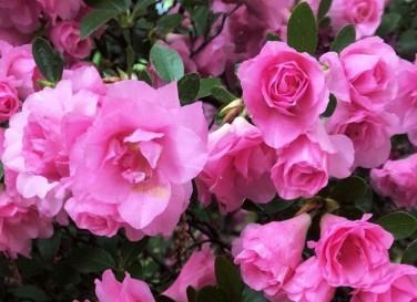 cropped reiki flowers